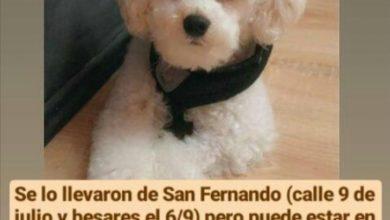 Photo of Les robaron a Rocco, y una familia está desesperada