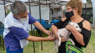 Photo of Zoonosis volvió a hacer operativos en los barrios