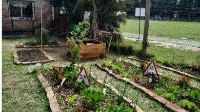 Photo of Lanzan un programa de huertas hogareñas