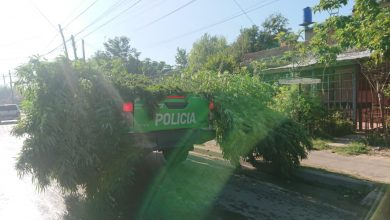 Photo of Un detenido y un patrullero cargado de marihuana