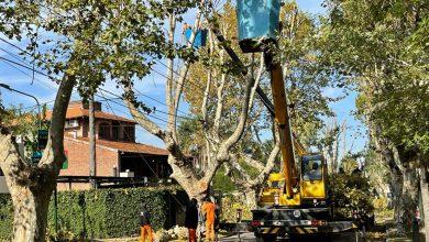 Photo of Más de 10 mil árboles ya fueron tratados en el Plan de Poda 2021