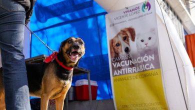 Photo of Jornada de vacunación de mascotas en Villa Adelina