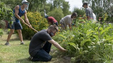 Photo of Enseñan como hacer una huerta orgánica en casa