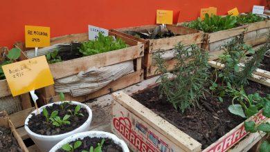 Photo of Entregan semillas para hacer huertas en hogares